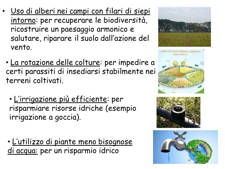 Uso di alberi nei campi con filari di siepi intorno: per recuperare le biodiversità, ricostruire un paesaggio armonico e salutare, riparare il suolo d