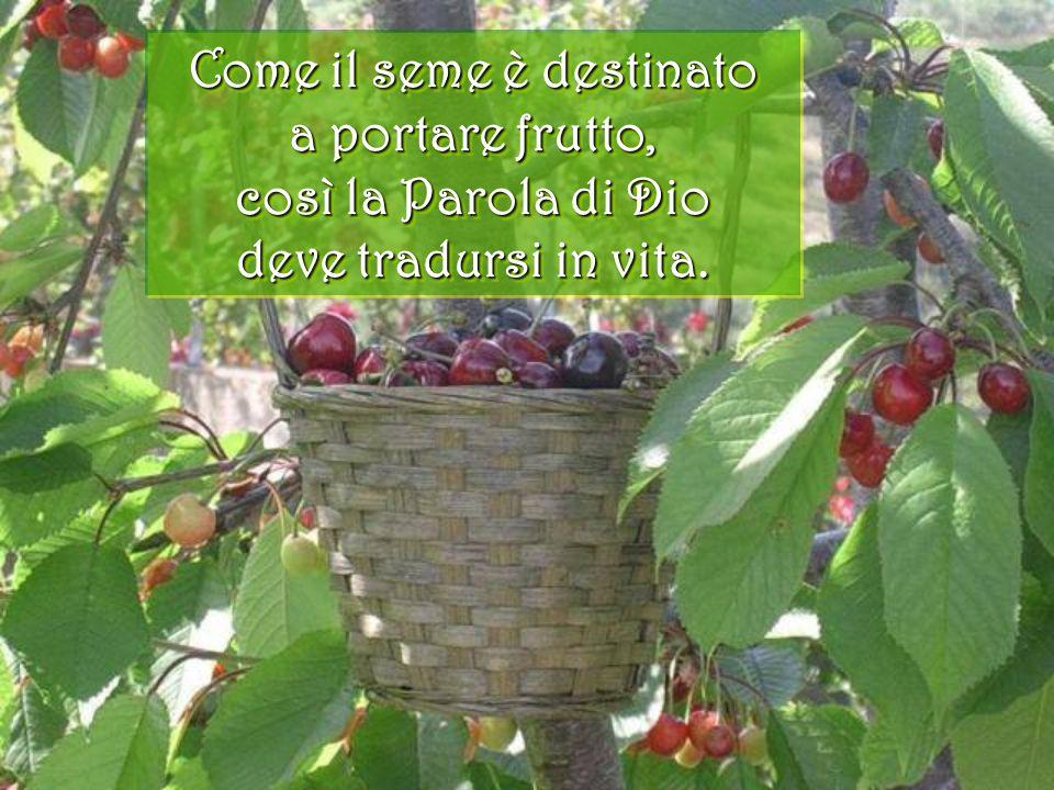 Come il seme è destinato a portare frutto, così la Parola di Dio deve tradursi in vita.