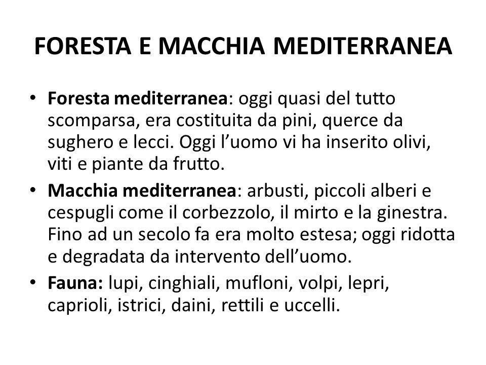 FORESTA E MACCHIA MEDITERRANEA Foresta mediterranea: oggi quasi del tutto scomparsa, era costituita da pini, querce da sughero e lecci. Oggi luomo vi