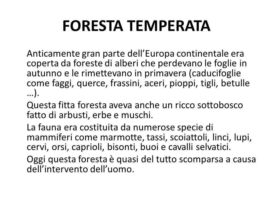 FORESTA TEMPERATA Anticamente gran parte dellEuropa continentale era coperta da foreste di alberi che perdevano le foglie in autunno e le rimettevano