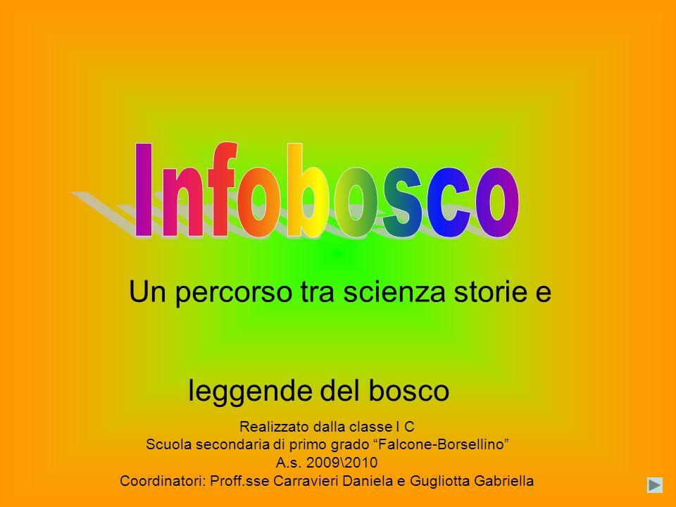 Un percorso tra scienza storie e leggende del bosco Realizzato dalla classe I C Scuola secondaria di primo grado Falcone-Borsellino A.s.