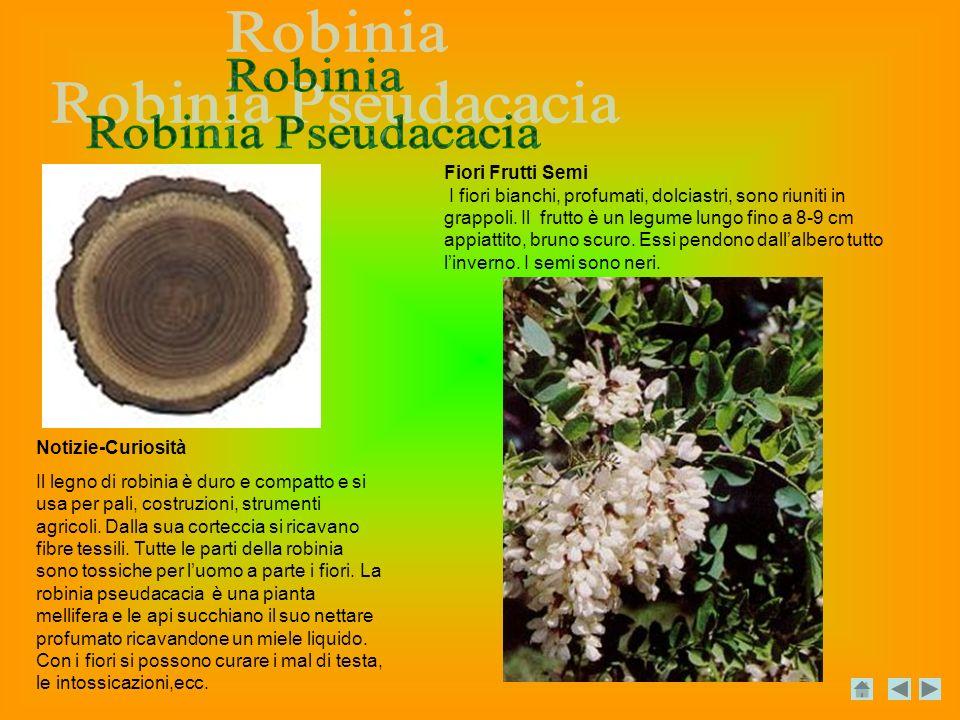 Notizie-Curiosità Il legno di robinia è duro e compatto e si usa per pali, costruzioni, strumenti agricoli.