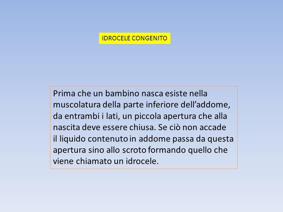 La discesa dei testicoli è regolata da due fattori, uno meccanico ed uno ormonale.