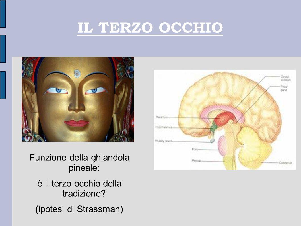IL TERZO OCCHIO Funzione della ghiandola pineale: è il terzo occhio della tradizione? (ipotesi di Strassman)