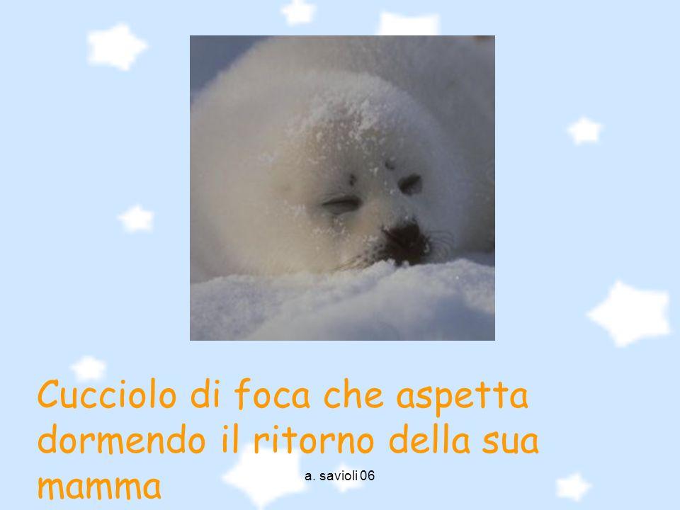 a. savioli 06 Cucciolo di foca che aspetta dormendo il ritorno della sua mamma