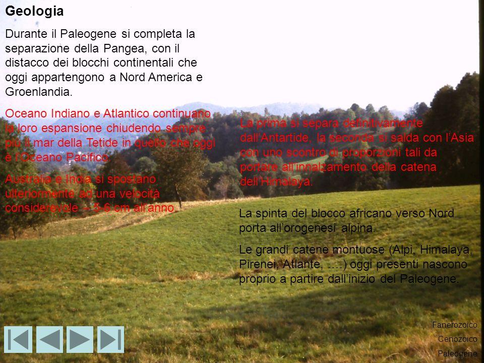 Geologia Durante il Paleogene si completa la separazione della Pangea, con il distacco dei blocchi continentali che oggi appartengono a Nord America e