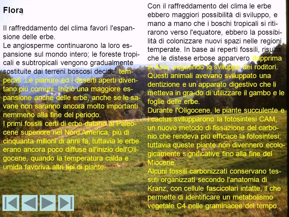 Flora Il raffreddamento del clima favorì l'espan- sione delle erbe. Le angiosperme continuarono la loro es- pansione sul mondo intero; le foreste trop