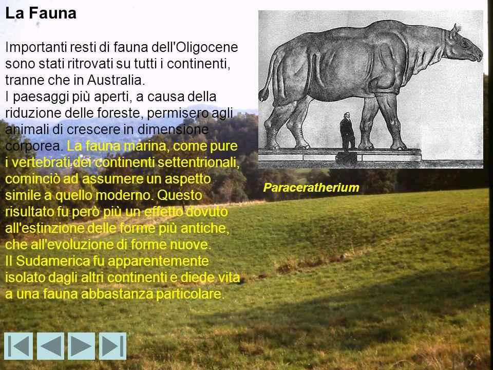 La Fauna Importanti resti di fauna dell'Oligocene sono stati ritrovati su tutti i continenti, tranne che in Australia. I paesaggi più aperti, a causa
