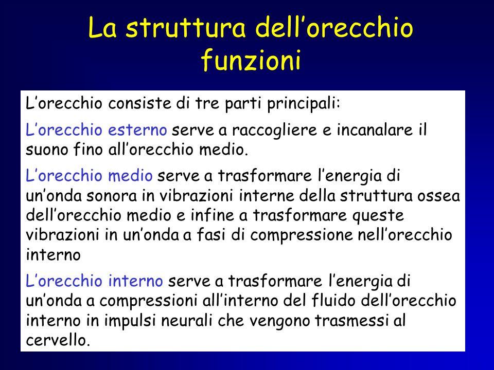 La struttura dellorecchio funzioni Lorecchio consiste di tre parti principali: Lorecchio esterno serve a raccogliere e incanalare il suono fino allore