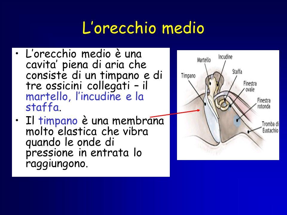 Lorecchio medio Lorecchio medio è una cavita piena di aria che consiste di un timpano e di tre ossicini collegati – il martello, lincudine e la staffa