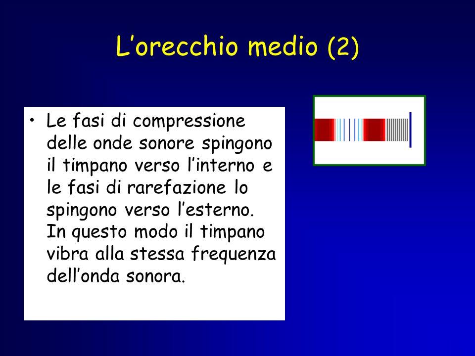 Lorecchio medio (2) Le fasi di compressione delle onde sonore spingono il timpano verso linterno e le fasi di rarefazione lo spingono verso lesterno.