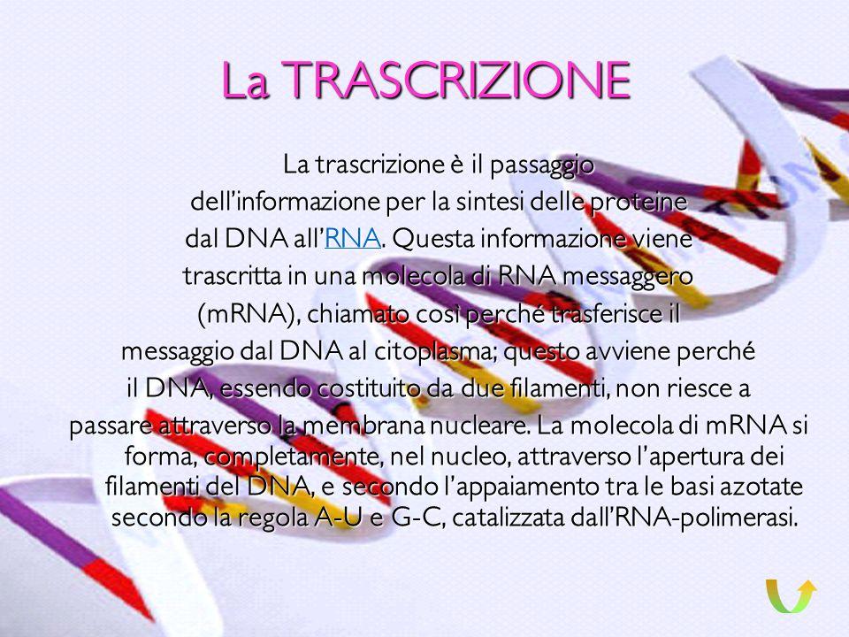 La REPLICAZIONE La replicazione, è una delle tre funzioni del DNA e consiste nel costituire una copia esatta del DNA stesso, e con la stessa sequenza