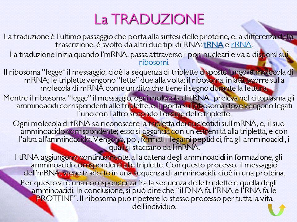 La TRASCRIZIONE La trascrizione è il passaggio dellinformazione per la sintesi delle proteine dal DNA allRNA. Questa informazione viene RNA trascritta
