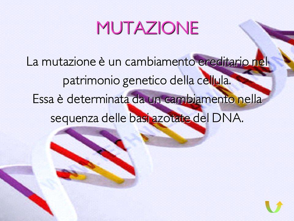 GENI INATTIVI O INESPRESSI Un gene si dice inattivo o inespresso, quando cessa del tutto la sua attività, e, non viene più trascritto in mRNA.