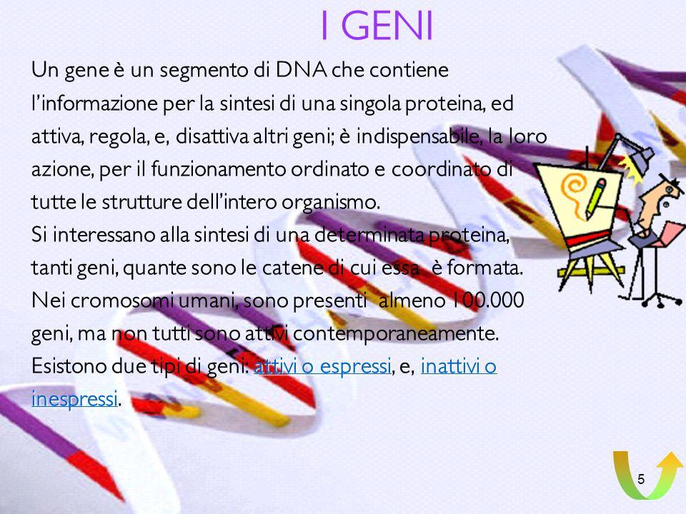 4 Il CODICE GENETICO Nella molecola di DNA le basi azotate sono ordinate secondo una precisa sequenza; in questa determinata successione è scritto il