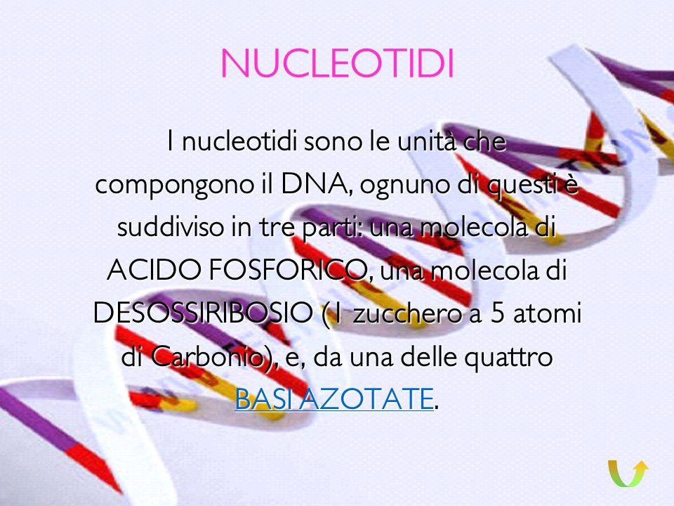 GENOMA Il genoma è il patrimonio ereditario di ogni individuo, ed è contenuto interamente nei suoi 46 cromosomi; in questi ultimi anni è stato possibi
