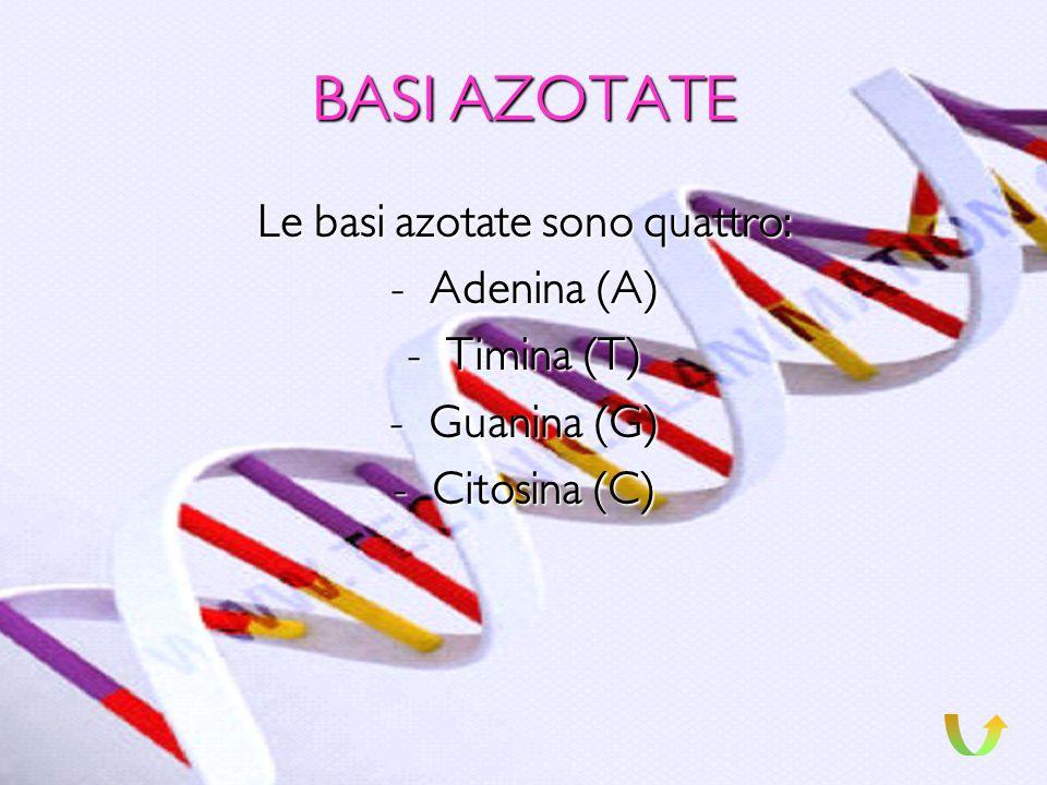 NUCLEOTIDI I nucleotidi sono le unità che compongono il DNA, ognuno di questi è suddiviso in tre parti: una molecola di ACIDO FOSFORICO, una molecola
