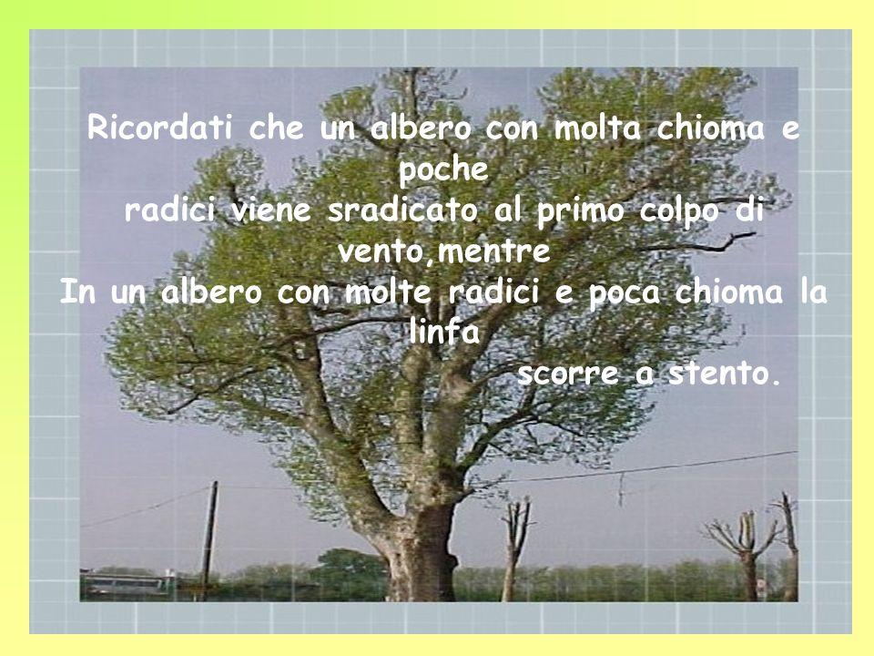 Ogni volta che ti sentirai smarrita,confusa, pensa agli alberi,ricordati il loro modo di crescere