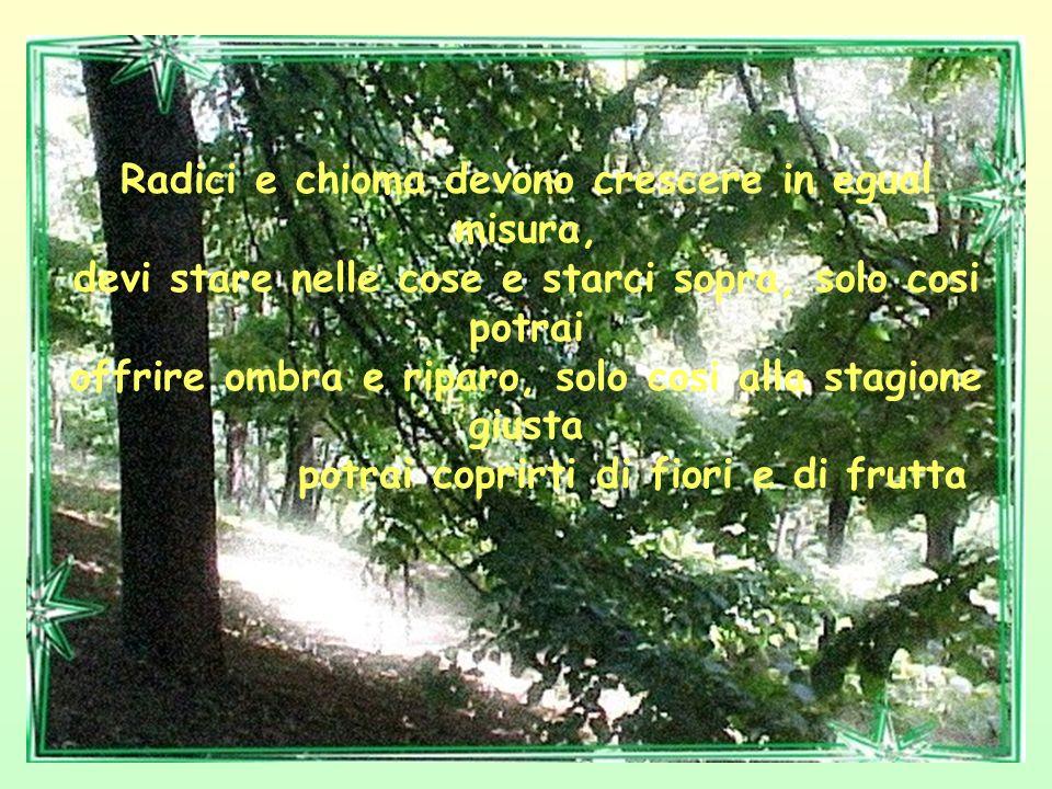 Ricordati che un albero con molta chioma e poche radici viene sradicato al primo colpo di vento,mentre In un albero con molte radici e poca chioma la