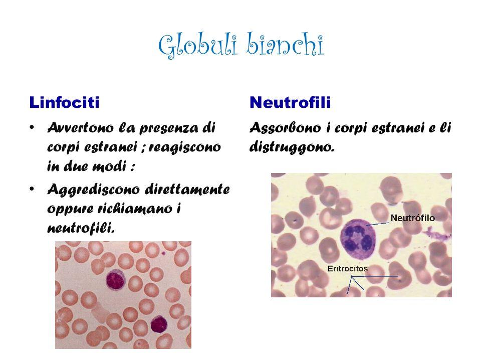 Gli Alveoli Venosi Gli alveoli venosi portano l anidride carbonica da espellere.