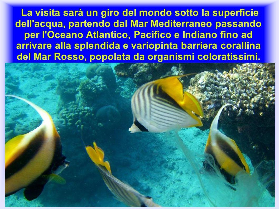 La visita sarà un giro del mondo sotto la superficie dell'acqua, partendo dal Mar Mediterraneo passando per l'Oceano Atlantico, Pacifico e Indiano fin