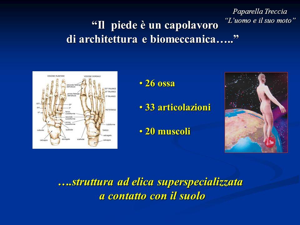 Il piede è un capolavoro di architettura e biomeccanica….. 26 ossa 26 ossa 33 articolazioni 33 articolazioni 20 muscoli 20 muscoli ….struttura ad elic