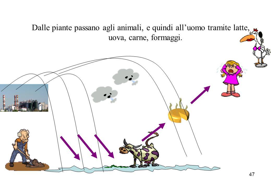 47 Dalle piante passano agli animali, e quindi alluomo tramite latte, uova, carne, formaggi.