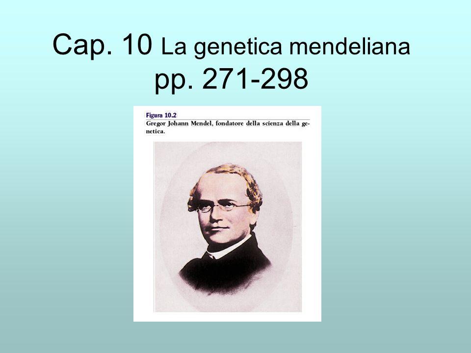 Sintesi 10 Gli incroci controllati di Mendel Incroci monoibridi e diibridi Ragionamento che porta a postulare lesistenza di geni Due concetti semplici semplici di statistica