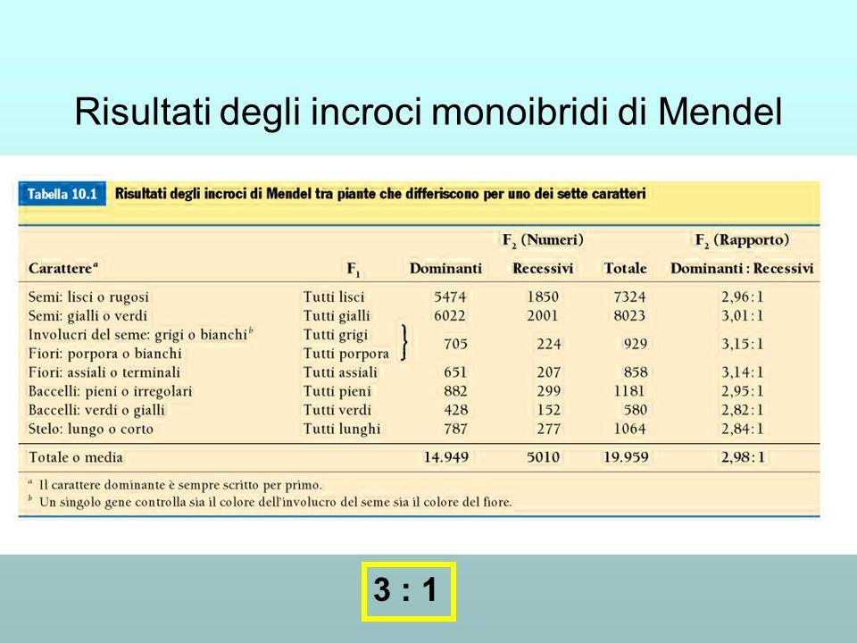 Risultati degli incroci monoibridi di Mendel 3 : 1