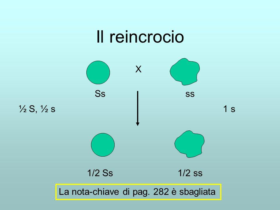 Il reincrocio Ss ss X 1/2 Ss 1/2 ss ½ S, ½ s 1 s La nota-chiave di pag. 282 è sbagliata