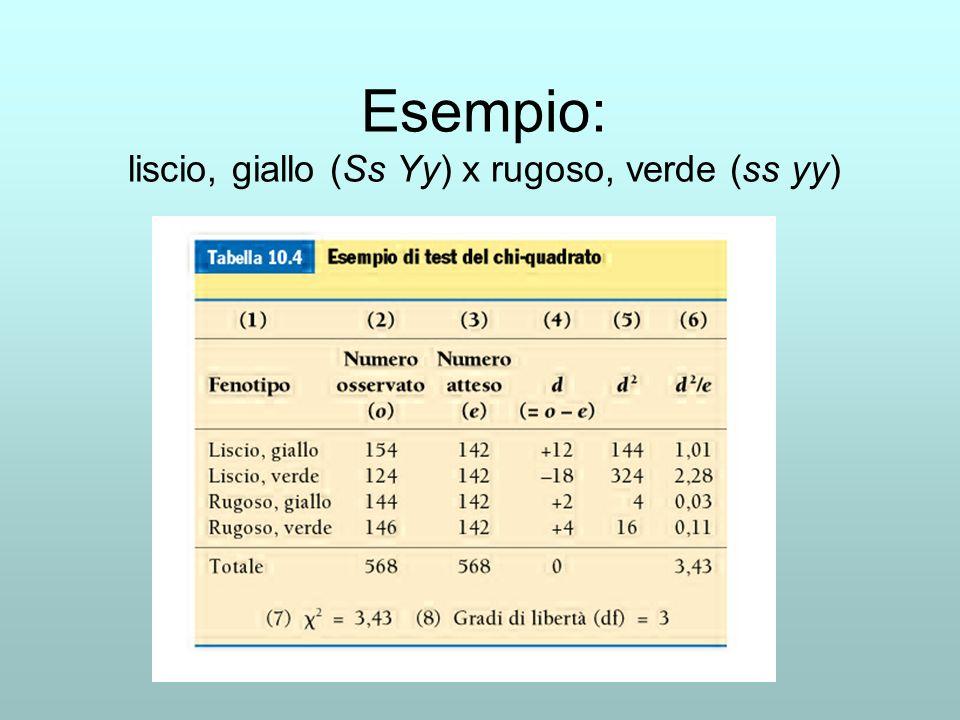 Esempio: liscio, giallo (Ss Yy) x rugoso, verde (ss yy)