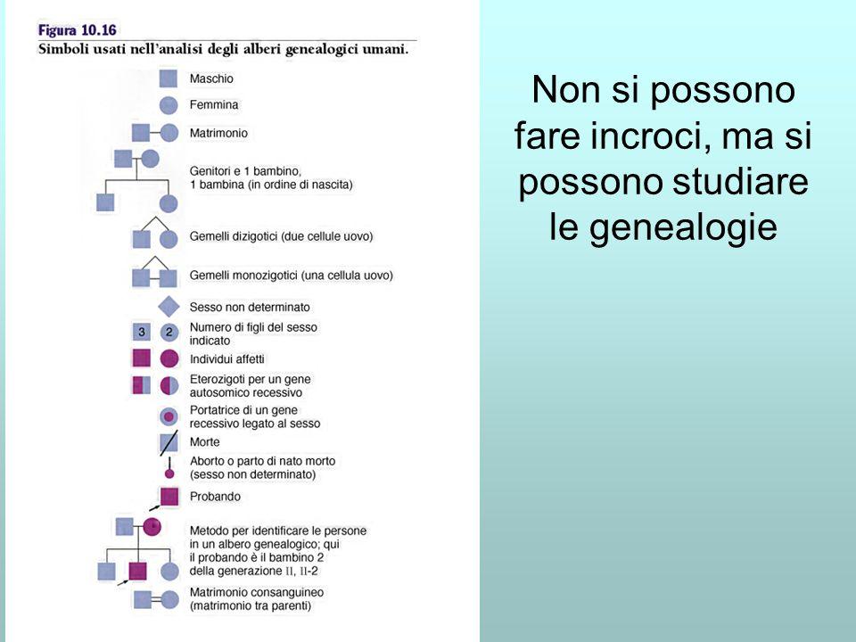 Non si possono fare incroci, ma si possono studiare le genealogie