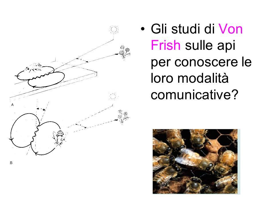 Gli studi di Von Frish sulle api per conoscere le loro modalità comunicative?