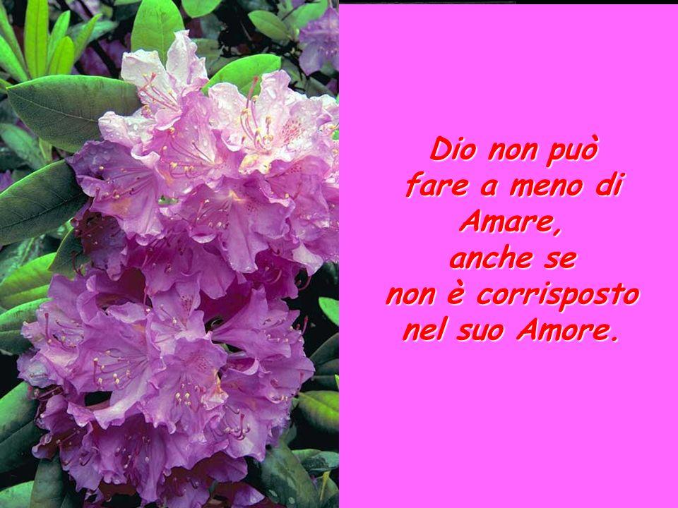 LAmore misericordioso di Dio Dio non può fare a meno di Amare, anche se non è corrisposto nel suo Amore.