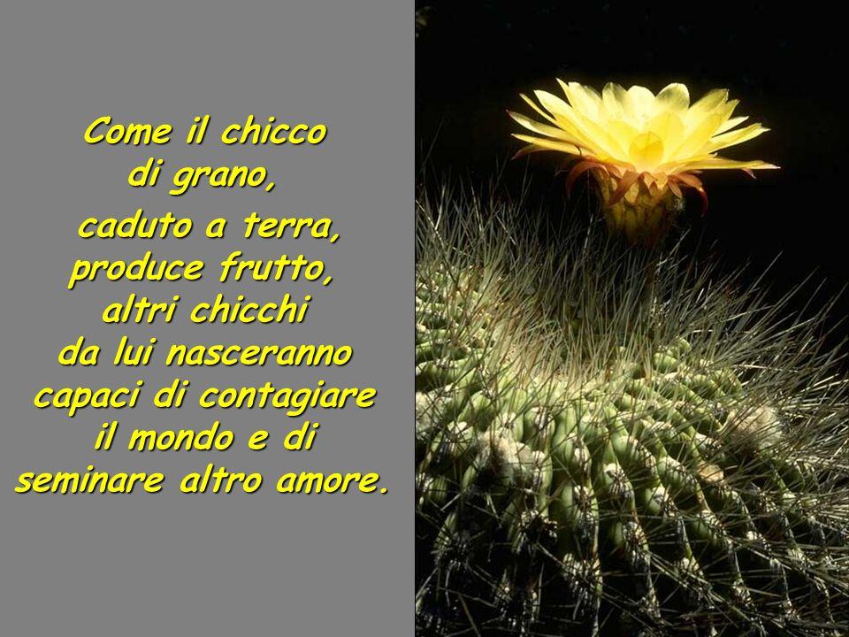 Ma quando qualcuno risponde a tale Amore, la Grazia si riversa su di lui e produce frutto, un frutto dAmore che genera altro Amore.