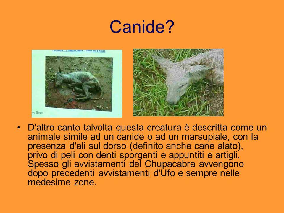 Canide? D'altro canto talvolta questa creatura è descritta come un animale simile ad un canide o ad un marsupiale, con la presenza d'ali sul dorso (de