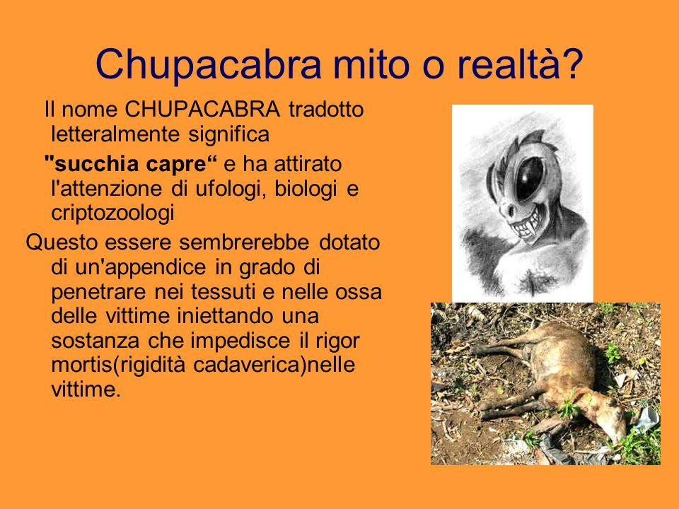Chupacabra mito o realtà? Il nome CHUPACABRA tradotto letteralmente significa