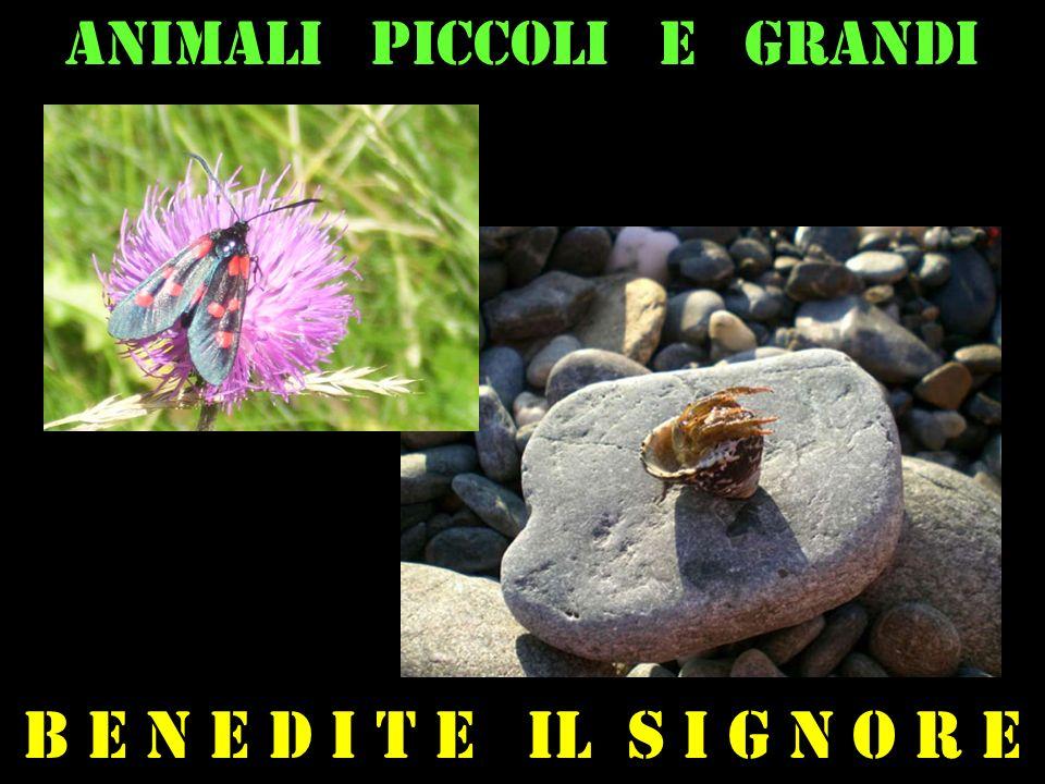 Animali piccoli e grandi B e n e d i t e il s i g n o r e