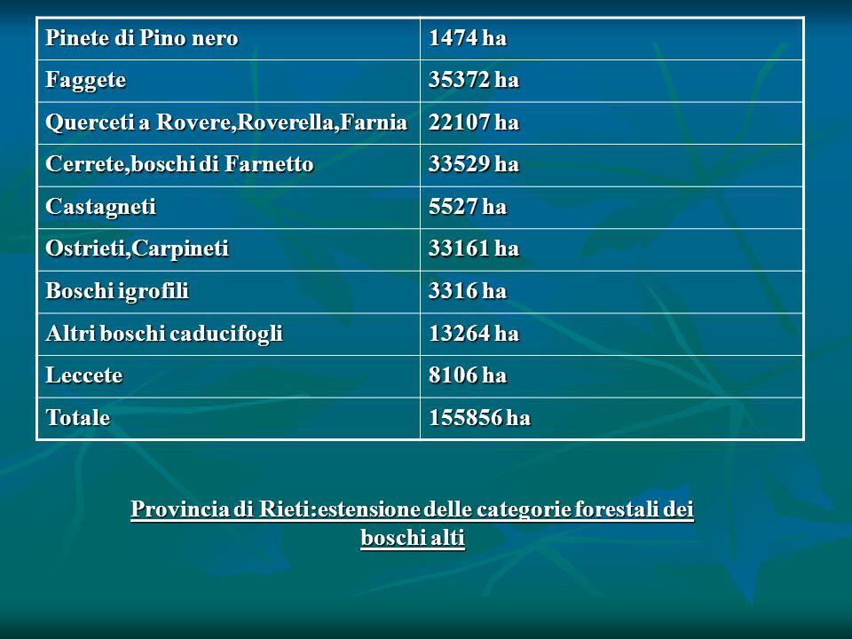 Provincia di Rieti:estensione delle categorie forestali dei boschi alti Pinete di Pino nero 1474 ha Faggete 35372 ha Querceti a Rovere,Roverella,Farni