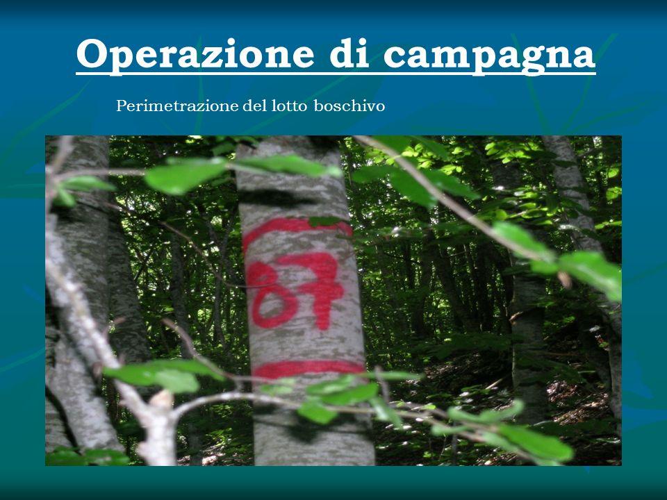 Operazione di campagna Perimetrazione del lotto boschivo