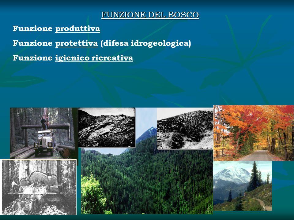 Funzione produttiva Funzione protettiva (difesa idrogeologica) Funzione igienico ricreativa FUNZIONE DEL BOSCO