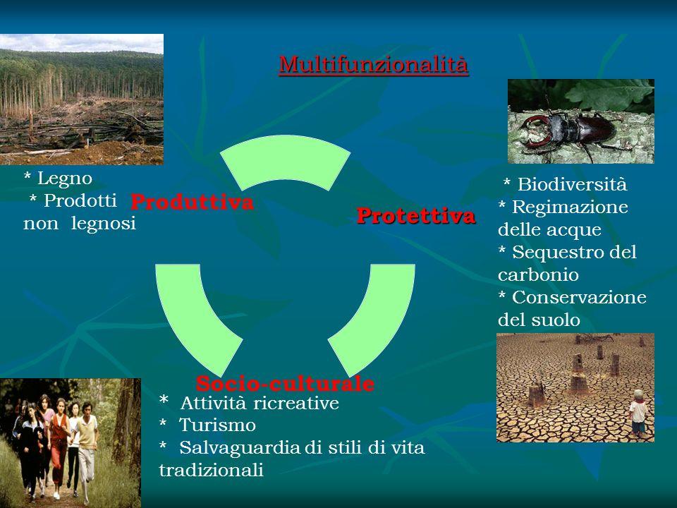 Multifunzionalità * Legno * Prodotti non legnosi * Biodiversità * Regimazione delle acque * Sequestro del carbonio * Conservazione del suolo * Attivit