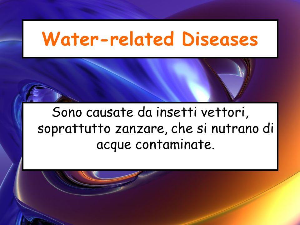 Water-related Diseases Sono causate da insetti vettori, soprattutto zanzare, che si nutrano di acque contaminate.