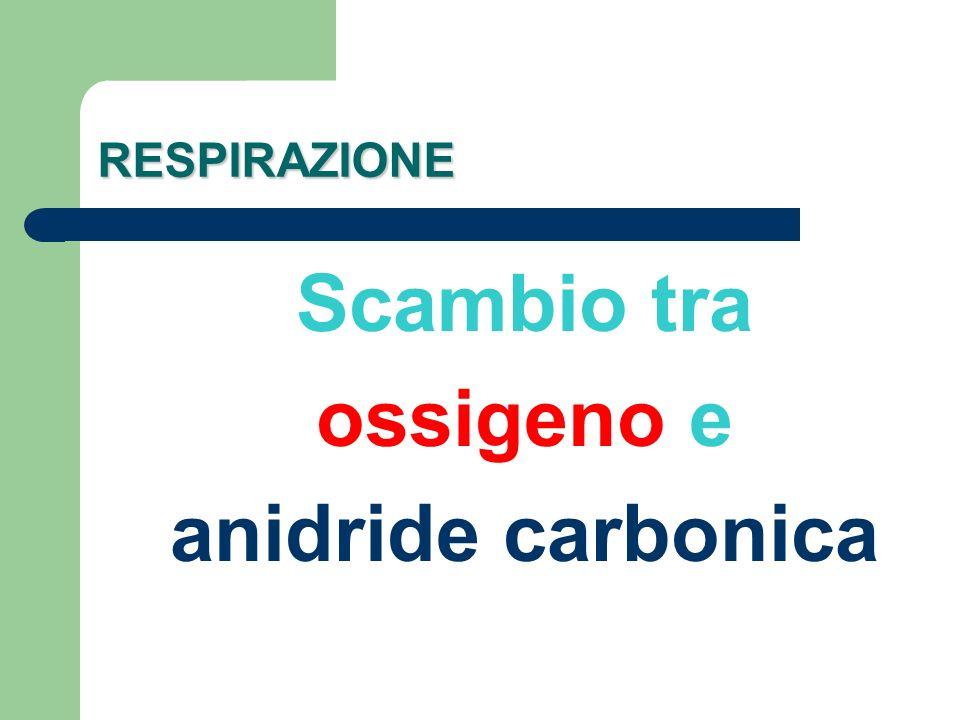 RESPIRAZIONE Scambio tra ossigeno e anidride carbonica