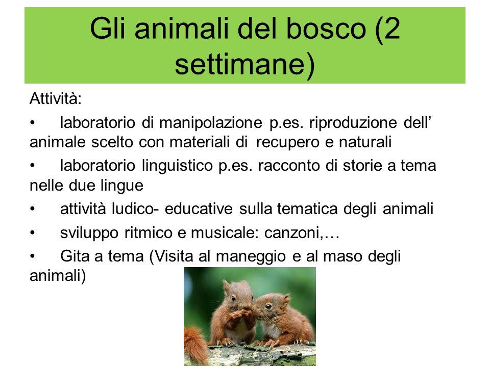 Gli animali del bosco (2 settimane) Attività: laboratorio di manipolazione p.es. riproduzione dell animale scelto con materiali di recupero e naturali
