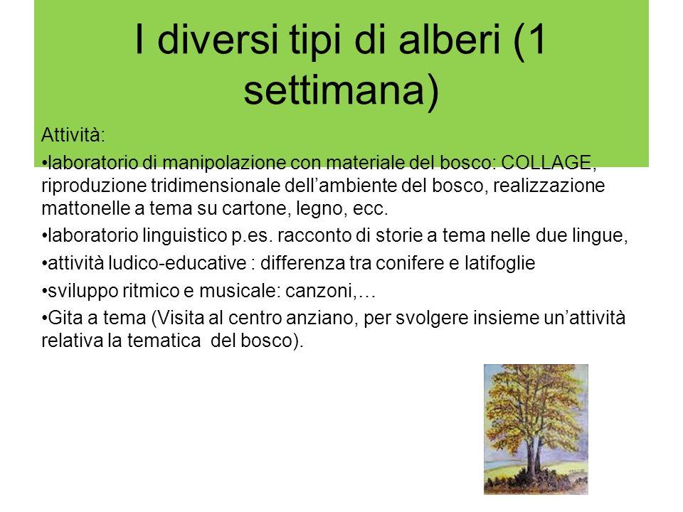 I diversi tipi di alberi (1 settimana) Attività: laboratorio di manipolazione con materiale del bosco: COLLAGE, riproduzione tridimensionale dellambie