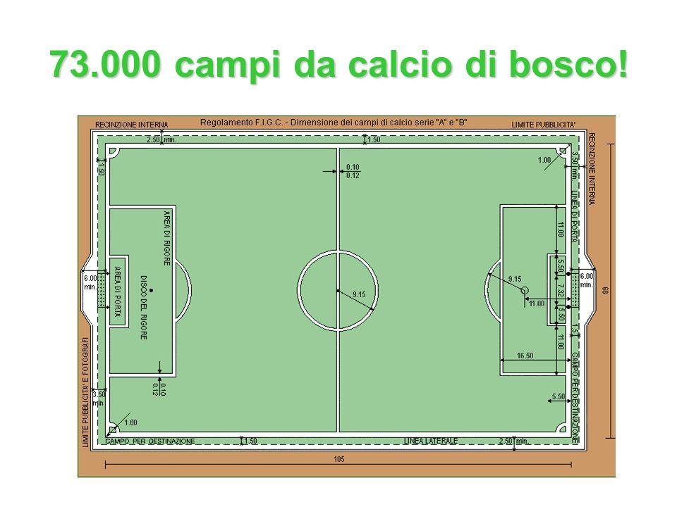 73.000 campi da calcio di bosco!