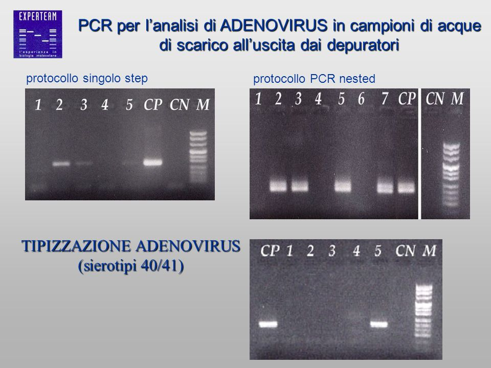 protocollo singolo step protocollo PCR nested PCR per lanalisi di ADENOVIRUS in campioni di acque di scarico alluscita dai depuratori TIPIZZAZIONE ADE