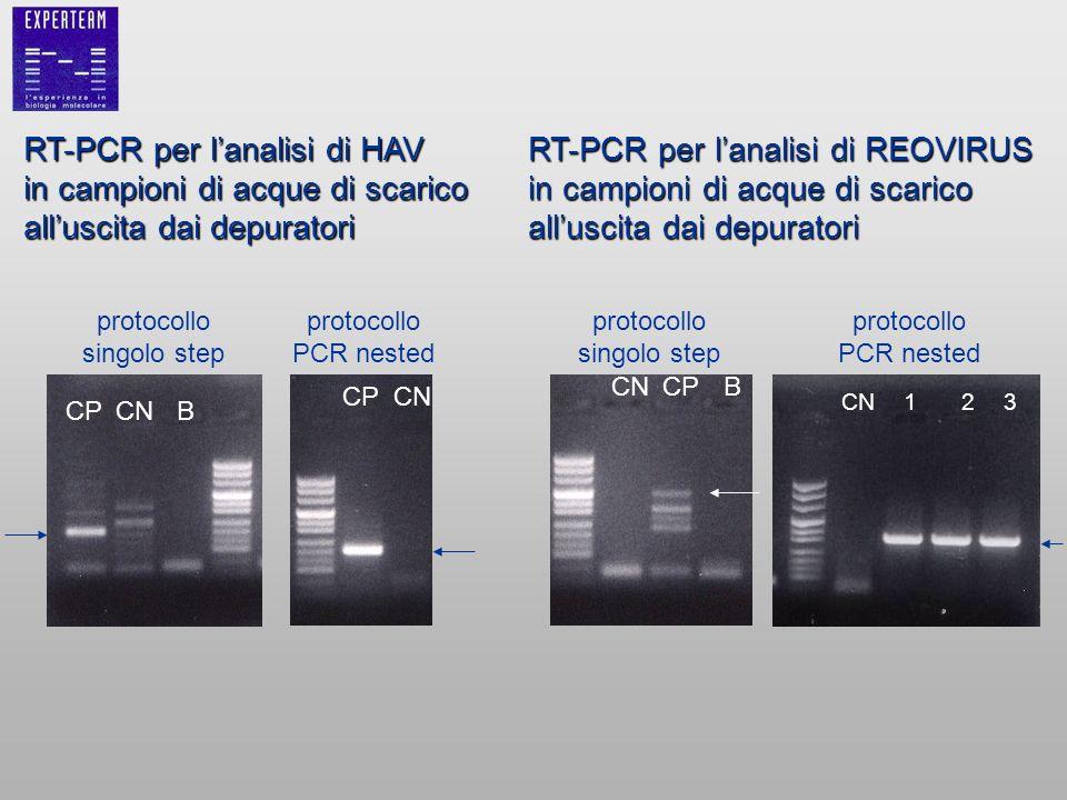 protocollo singolo step protocollo PCR nested CPCNB CPCN RT-PCR per lanalisi di HAV in campioni di acque di scarico alluscita dai depuratori RT-PCR pe