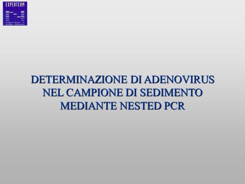 DETERMINAZIONE DI ADENOVIRUS NEL CAMPIONE DI SEDIMENTO MEDIANTE NESTED PCR